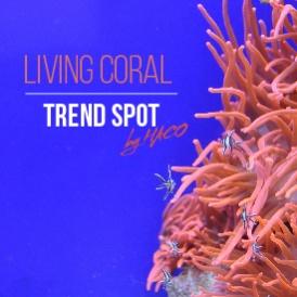 Living Coral - A cor de 2019